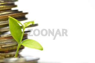 Plant and lot of coins