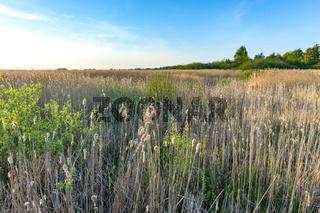 Landschaft am Dümmer See-72