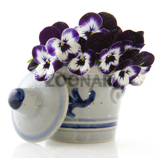 Cologne pot with Viola flowers