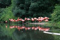 Flamingo Gruppe