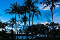 Palmen bei Sonnenuntergang in Ko Samui