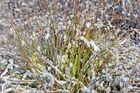 Close-up of frost covered grass