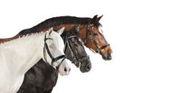 verschiedene Pferde weiß Collage