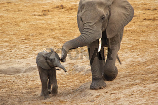 elephant mother and his cube