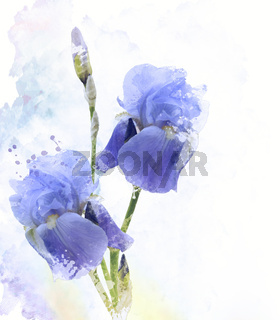 Iris Flowers Watercolor