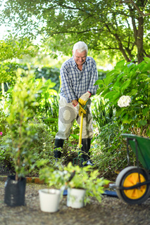 Senior man using rake in garden