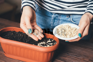Women's hands with bright manicure is poured into a pot seeds to grow plants