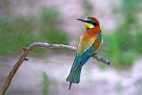 Exotic tropical bird
