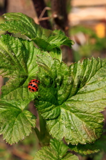 roter käfer in grün