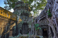 Roots covering the ruin of Ta Prohm temple