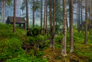 Wooden house in forest