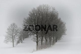 Winterschönheit