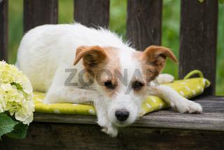 Hund auf Gartenbank