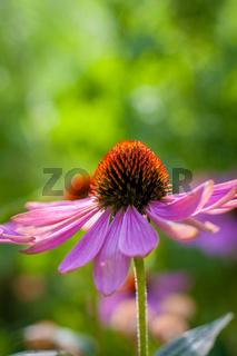 Sommer im Biogarten-45