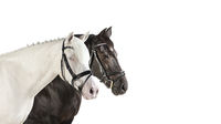 Pferdeköpfe weiß Collage