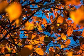 Bunter Herbst-35