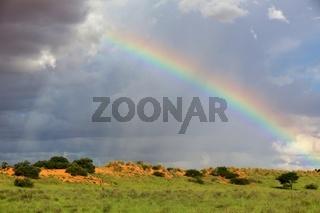 a rainbow at kgalagadi national park south africa