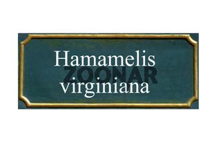 schild hamamelis