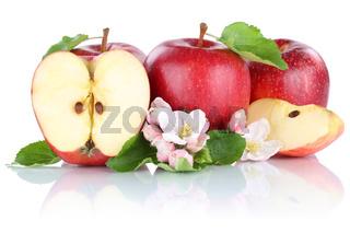 Apfel Äpfel rot Frucht Früchte Obst geschnitten Hälfte Freisteller freigestellt isoliert