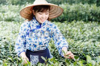asian pretty tea-picking girl in plantation