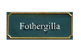 schild Fothergilla, Grosser Federbuschstrauch
