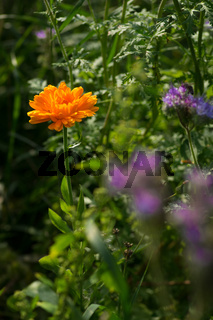 Sommer im Biogarten-47