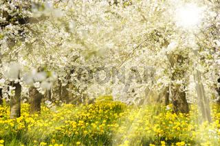 Sonnenstrahlen und Apfelbäume