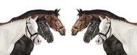 Pferde weiß Collage