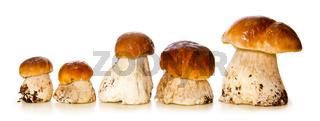 Five porcini mushrooms.