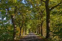 Eichenallee im Herbst