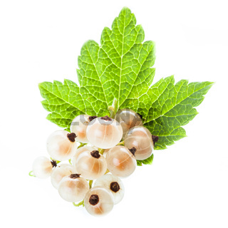 White currant isolated
