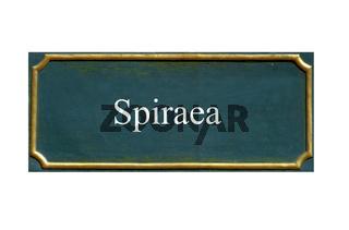schild Spiraea, Spierstrauch