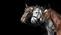 Pferde Collage schwarzer Hintergrund