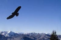 Vogelflugwarnung an Glasscheibe