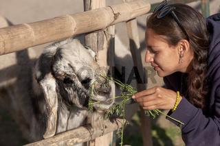 Young woman feeding a goat in safari park.
