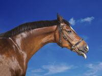 Pferd blauer Himmel