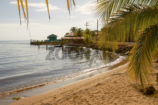 Relaxing view of a beach and palms at island of Roatan in Honduras