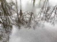 reflection on the wet asphalt road