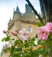 Castle  Roses