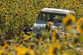 Citroen 2CV in Sonnenblumen