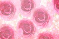 Pink rose with light bokeh.