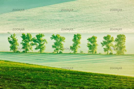Moravian rolling landscape in early morning