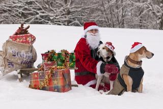 Weihnachten mit Hunden
