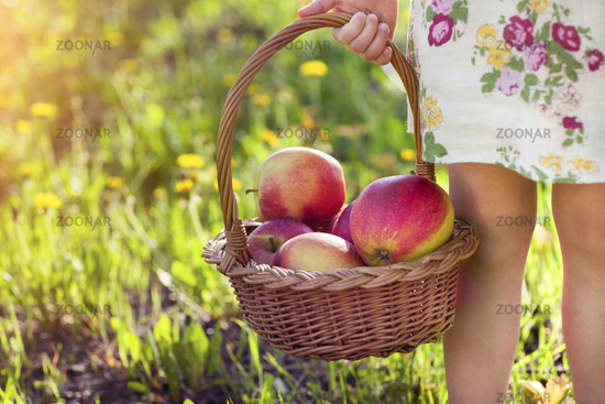 Little cute girl holding a basket with red apples