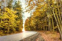 Yellow road in fall