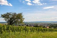 Weinberg Rechnitz / Südliches Burgenland