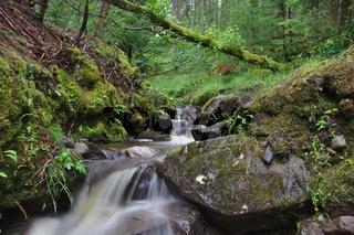 Kleiner Bach nahe Falls of Bruar 1