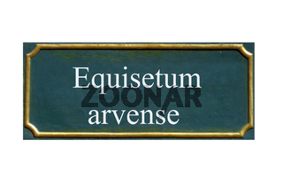 schild Ackerschachtelhaml, equisetum arvense