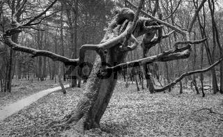 Ostsee - Im Darsswald