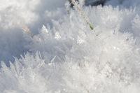 Grashalm in Eiskristallen